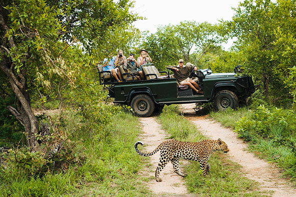 Safari in South Africa with Cheetah