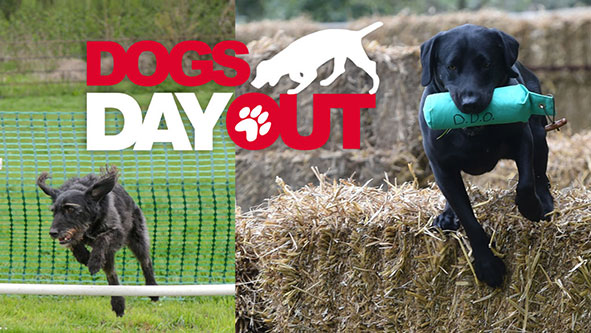 Dogs' Day out at Swanbourne House School Milton Keynes