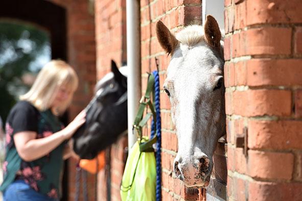 Ride High Equestrian Centre