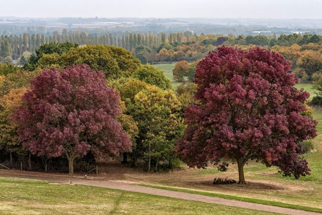 Autumnal trees in Campbell Park