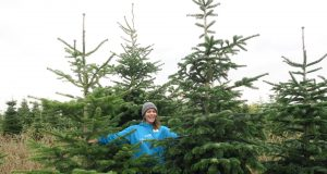 Recycle your Christmas Tree
