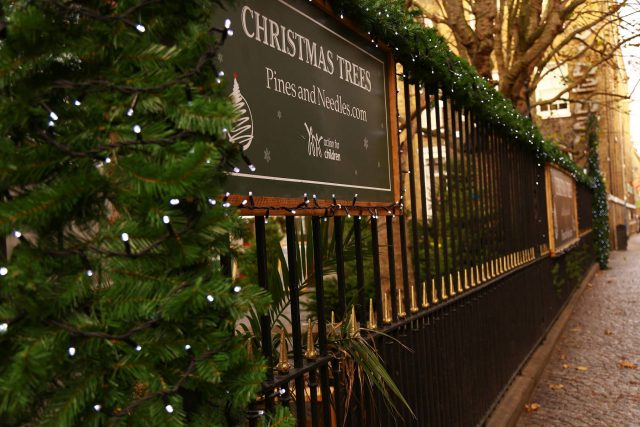 Christmas Tree Supplier Offers Discounted Black Friday