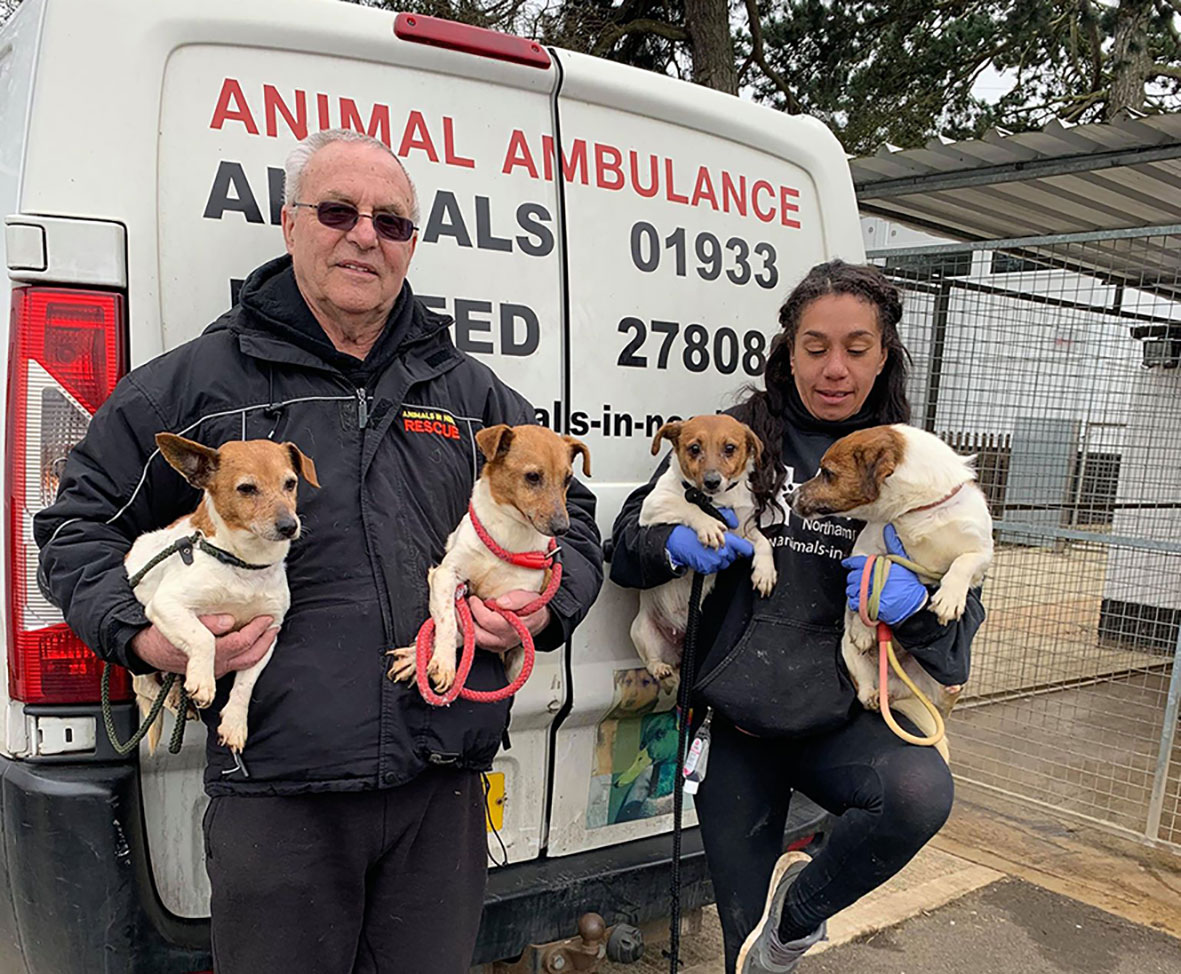 Dogs arrive at Animals In Need