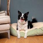 www.dogco.uk