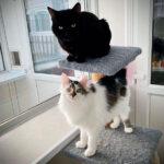 Purr-fect-pals-Skye-&-Robbie